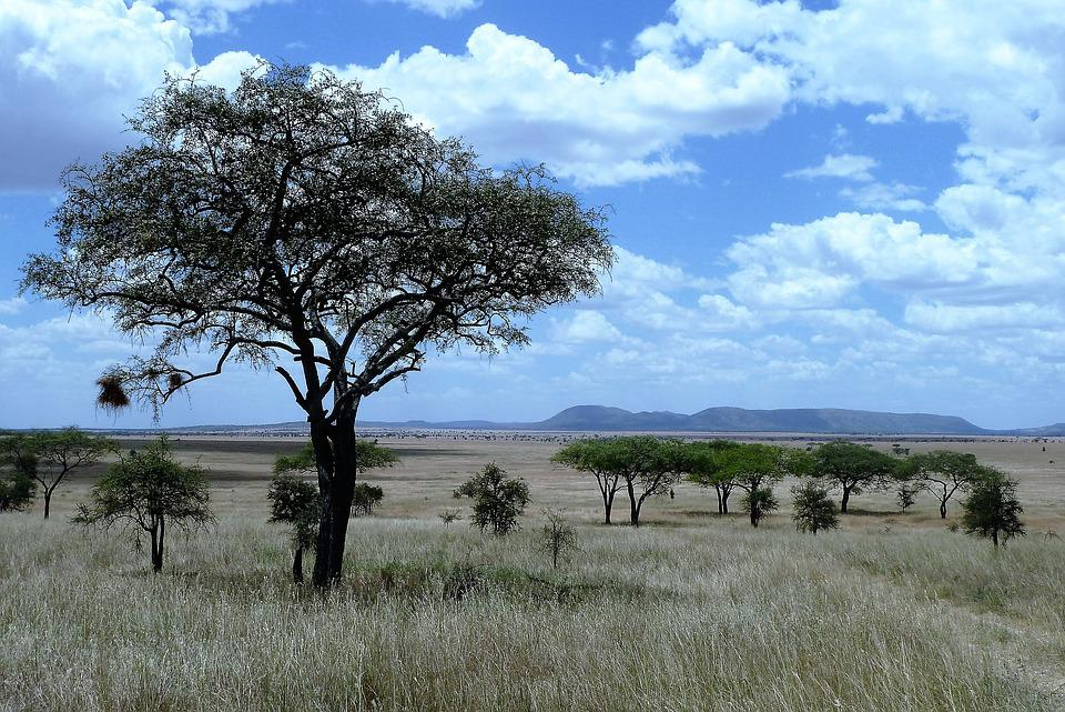 Nature, Africa, Tanzania, Serengeti, Safari, Grassland