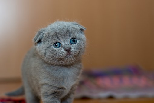 Adorable, Animal, Cat, Cute, Furry