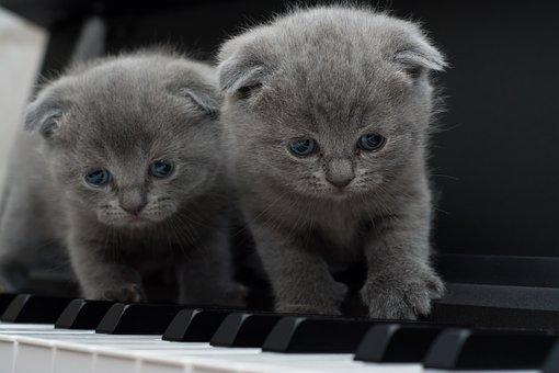 Cat, Cats, Kitty, Piano, Cat, Cat, Cats