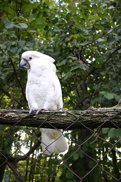 parrots kakadu bird  u00b7 free photo on pixabay