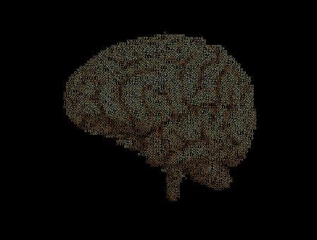 Cerebro, Cálculo, Inteligencia
