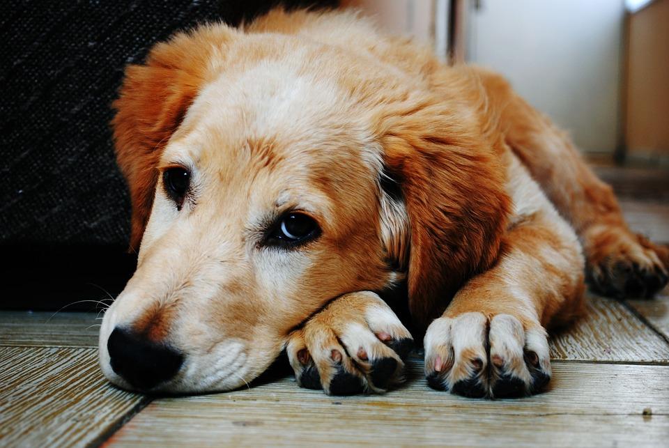 Полезные советы врача ветеринара, которые помогут вашим любимцам оставаться здоровыми