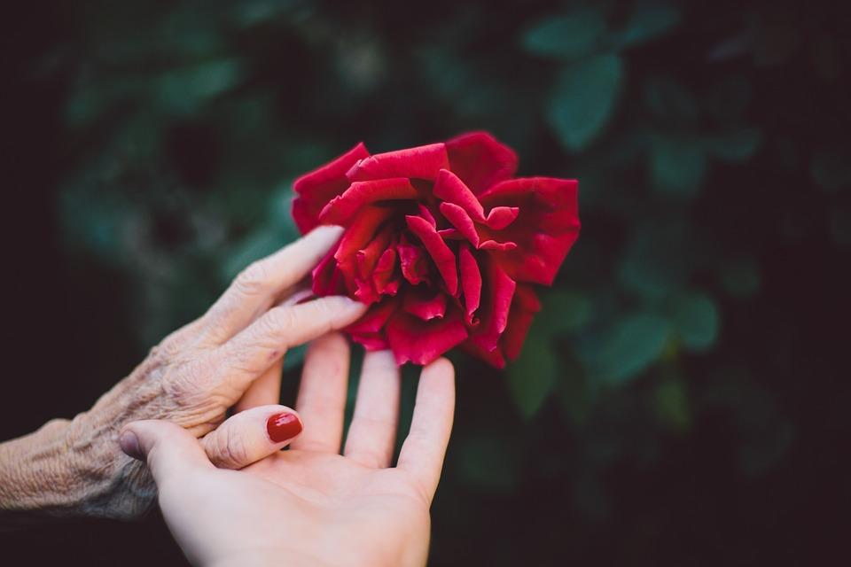 Bloom, Flor, Idosos, Flora, Mãos, Amor, Pétalas, Rose