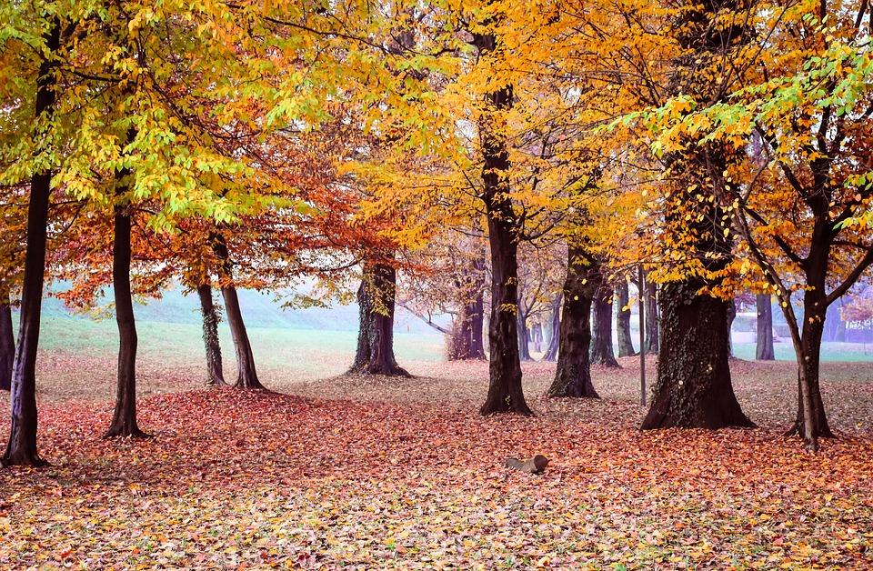 árboles Otoño Amarillo Foto Gratis En Pixabay