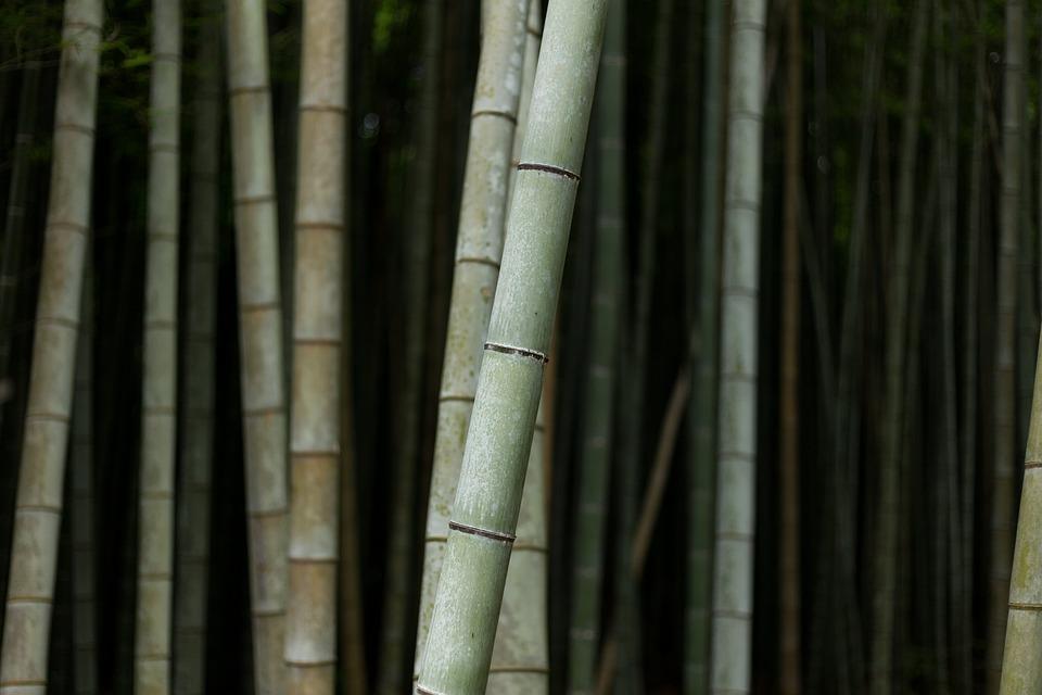 Bambus Natur Anlegg Gratis Foto Pa Pixabay