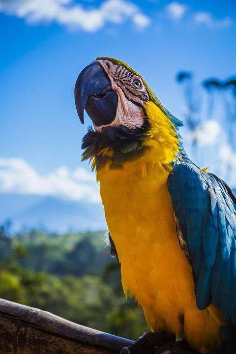 Free photo animal avian beak beautiful free image on pixabay animal avian beak beautiful bird blur bright voltagebd Image collections