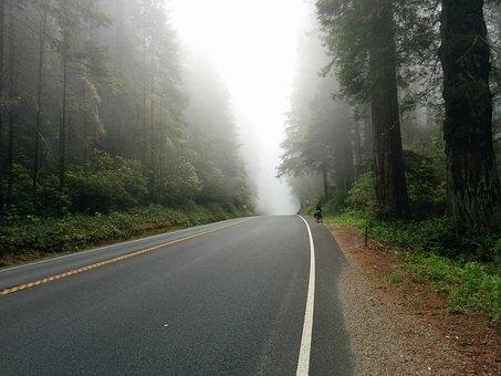 Asphalt, Drive, Fog, Foggy, Foliage
