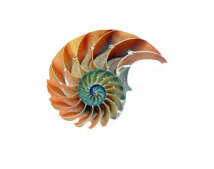 Shell, Snail, Nautilus, Snail Shell
