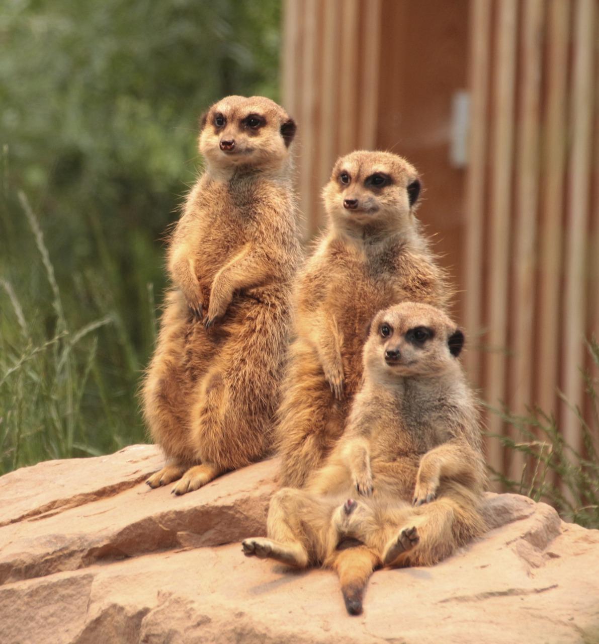 Картинка семья животные прикольные
