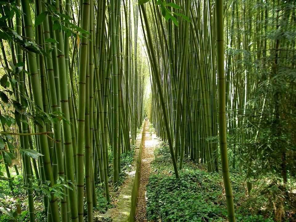 Bambus Garten Japanischer Kostenloses Foto Auf Pixabay