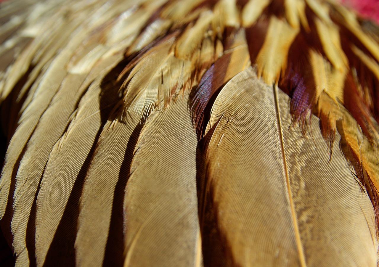 она красивые перья птиц фото рассказать еще