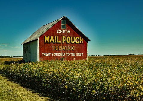 Mail Pouch Tobacco Barn Farm Soybeans Crop