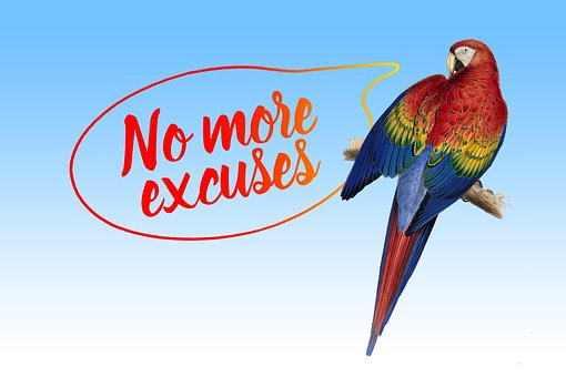 Excuse Me, Balloon, Parrot, Ara, Excuse