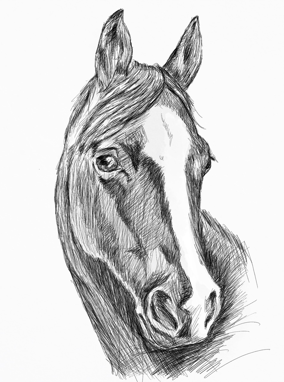 Illustration Horse Horsehead Black Free Image On Pixabay