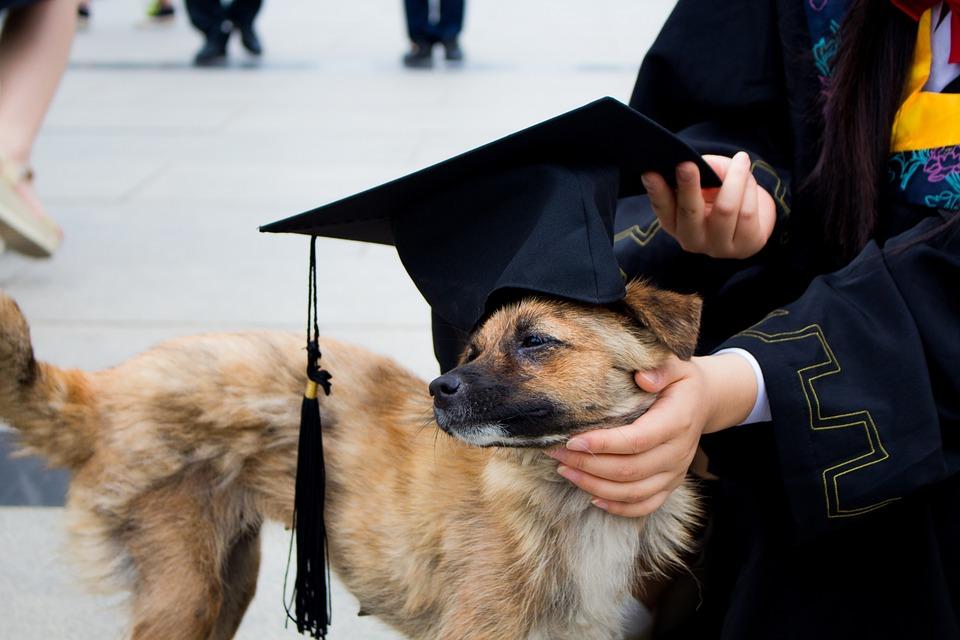 Dog Graduation Photo Bachelor Gown · Free photo on Pixabay