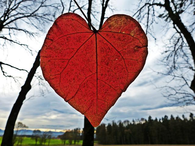 Leaf Heart Red Free Photo On Pixabay