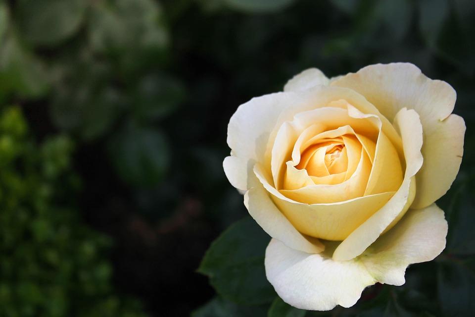 Unduh 61+ Gambar Bunga Hd Terbaik Gratis