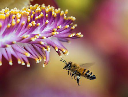 Bee, Blur, Close-Up, Flora, Flower