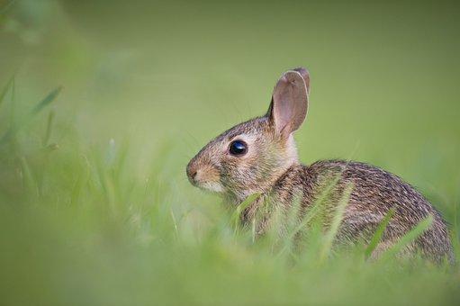 Adorable Animal Bunny Cute Grass Nature Ra