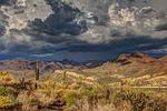 arid, cactus