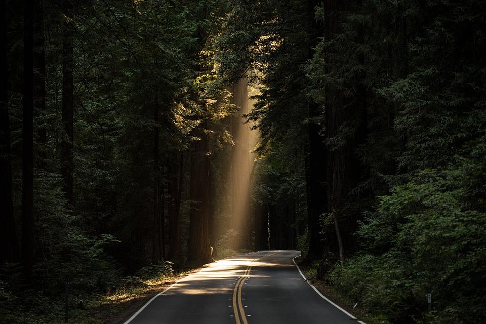 Drzewa Iglaste, Światło Słoneczne, Drogi, Aleja, Ulicy