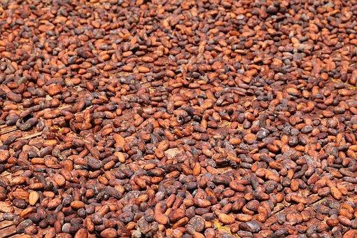 producción, distribución y comercialización de plantas, semillas, árboles