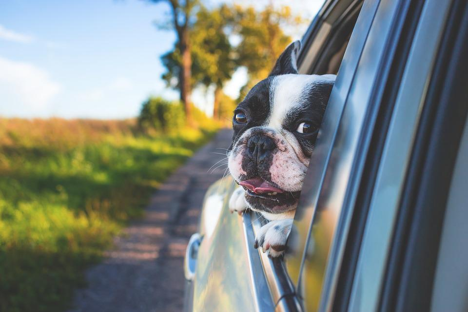 Dog, Pet, Car Window, Drive, Road Trip, Animal, Bulldog