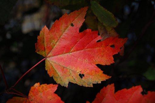 Autumn, Blur, Bright, Change, Color