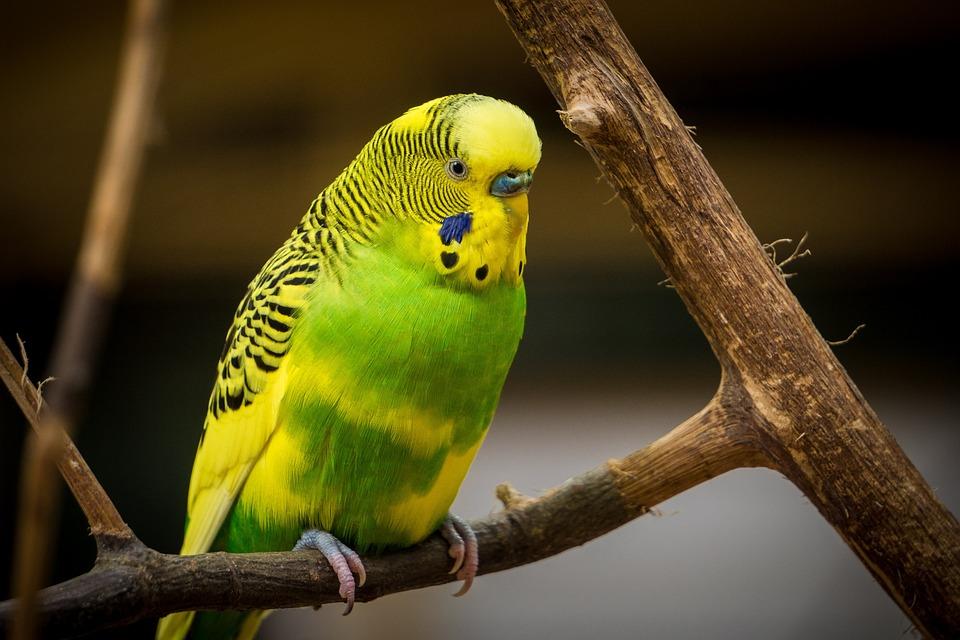 Bisnis peternakan, Hewan, Burung, Warna, Warna Warni, Warna-Warni, Bulu