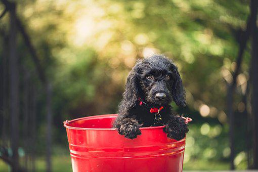 Adorable, Dog, Bucket, Animal, Canine