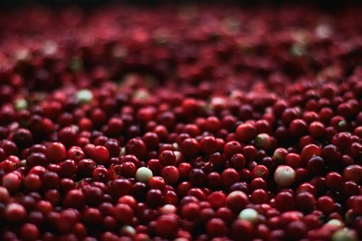 Berries Close-Up Cranberries Food Fruits H