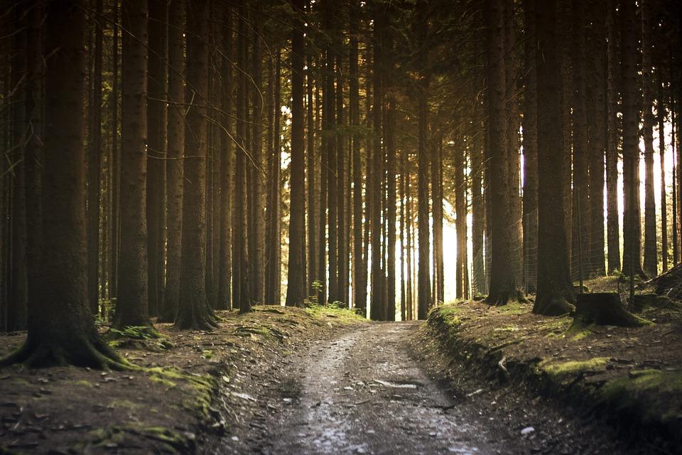 Forest Path – Pixabay – Pexels