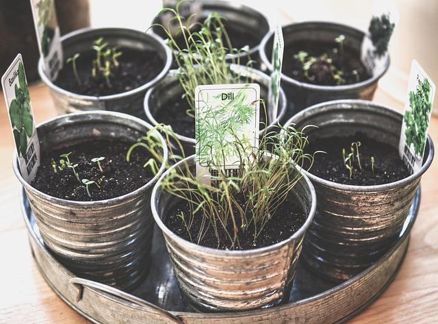 Riciclare i barattoli come vasi per piante aromatiche