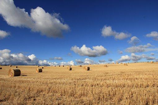 农产品品牌如何起名和策划?