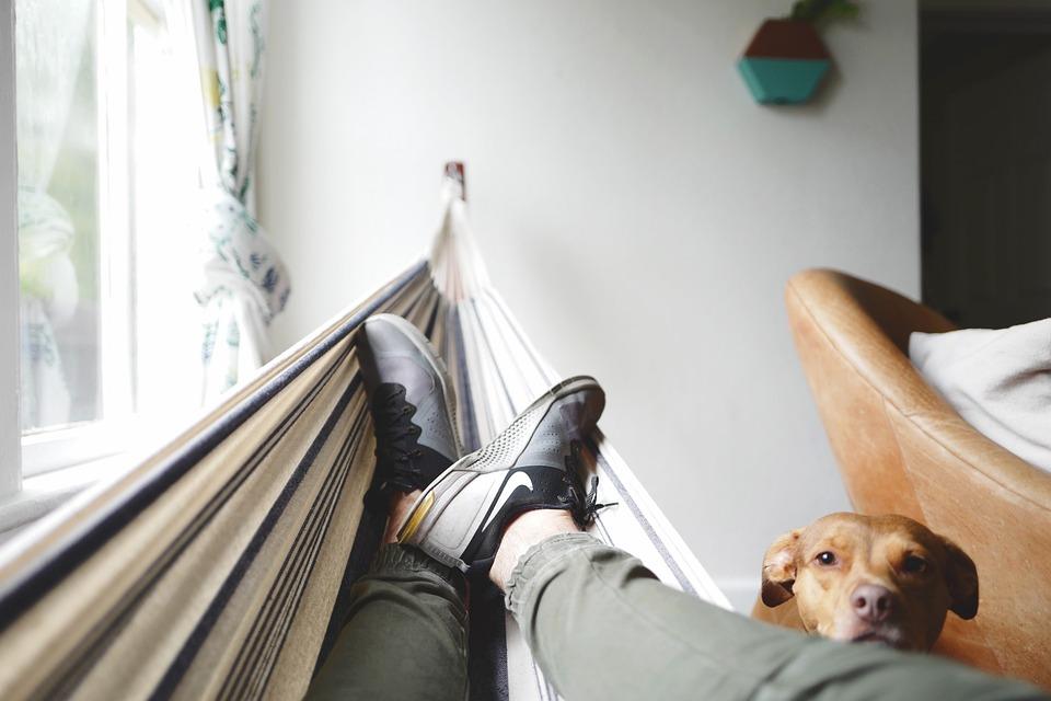 Hond, Cute, Schoeisel, Hangmat, Binnenshuis, Huisdier