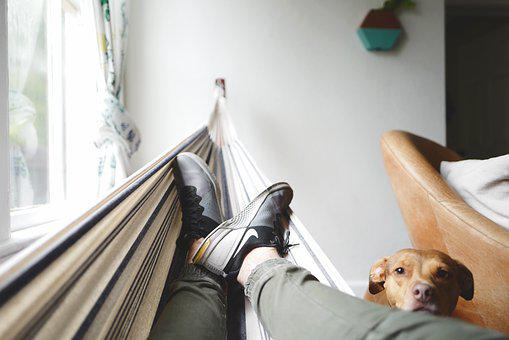 Canine, Cute, Dog, Footwear, Hammock