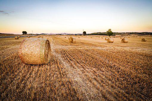 Agriculture, Countryside, Crop, Cropland
