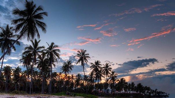 Más De 3000 Imágenes Gratis De Palmeras Y Playa Pixabay