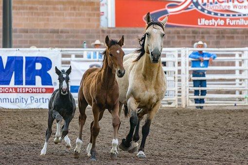 Animals, Cowboy, Equine, Foal, Horses