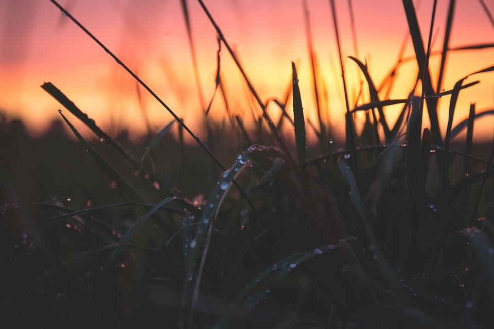 Blur, Close-Up, Dawn, Dewdrops, Dusk