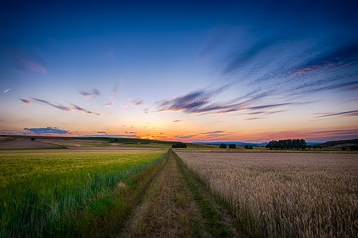 Clouds, Countryside, Crop, Dawn, Farm