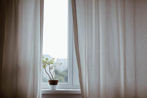 Curtains, Decoration, Indoors, Plant