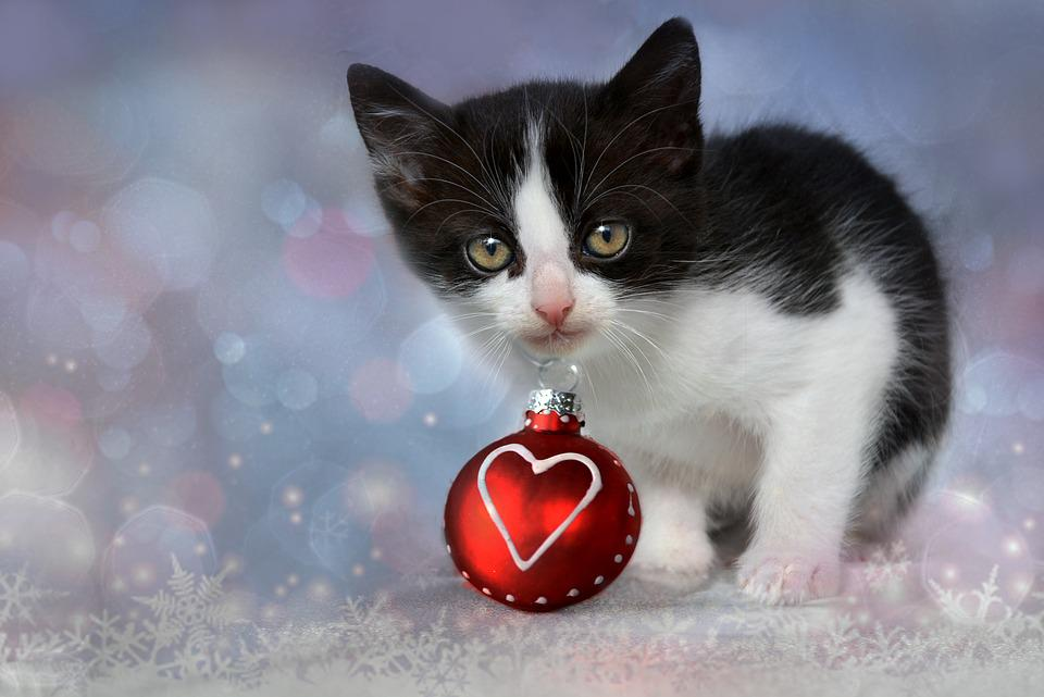 Free photo: Kitten, Grey, Heart, Cat, Christmas - Free Image on ...