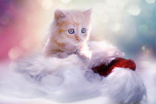 Kitten, Grey, Heart, Cat, Christmas, Pet
