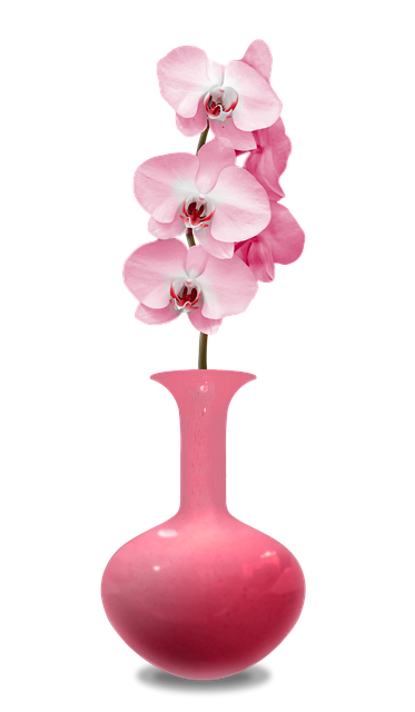 vase orchid es rose salle de image gratuite sur pixabay. Black Bedroom Furniture Sets. Home Design Ideas