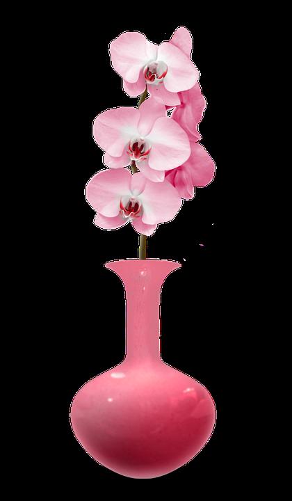 Illustration Gratuite Vase Orchid Es Rose Image Gratuite Sur Pixabay 1857128