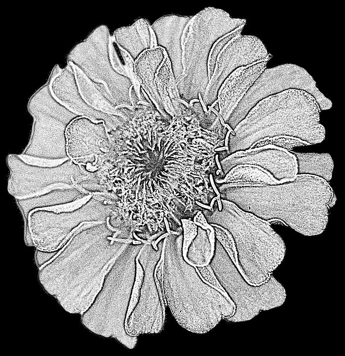 illustration gratuite: dahlia, dessin, fleur - image gratuite sur