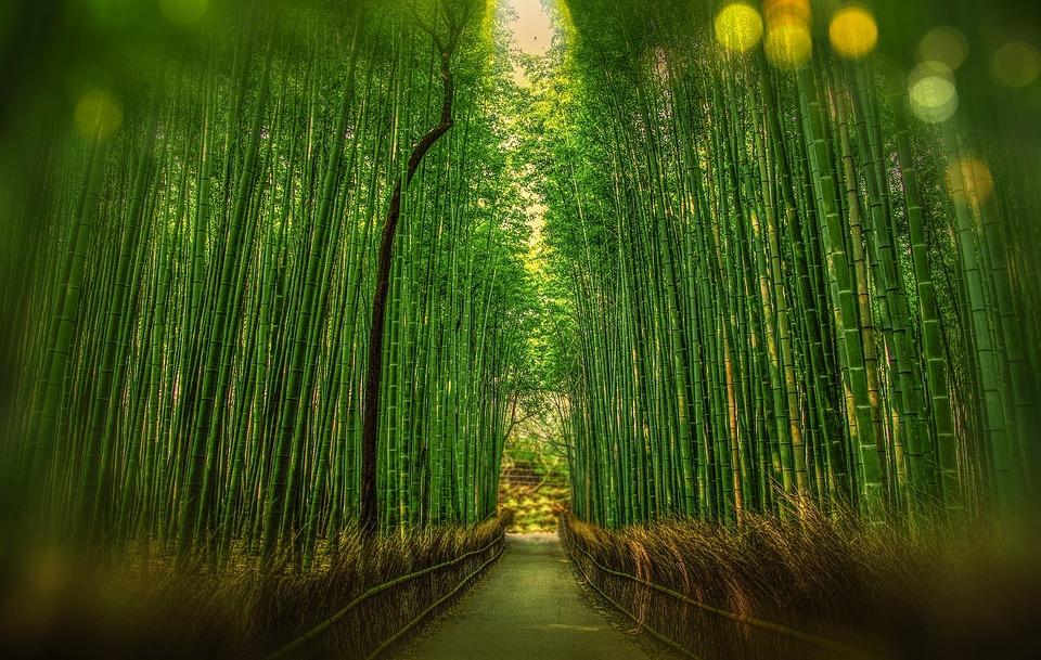 京, 日本, 竹, ボケ味, 冒険, 森林, 旅行
