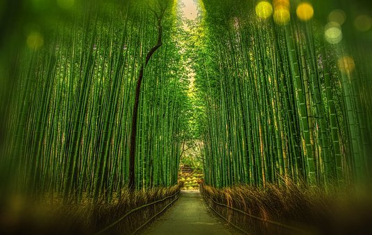 Kyoto Japan Bamboo Bokeh Adventure Forest