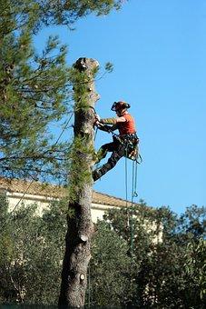 Work, Tree Trimming, Cup, Limbing